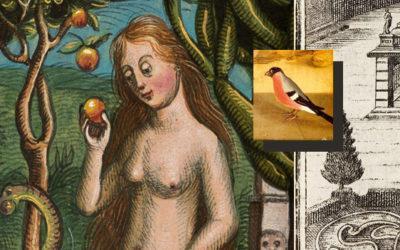"""Künstlerischer Online-Workshop """"Mein innerer Garten"""" im Dialog mit Kunstwerken der Veste Coburg"""